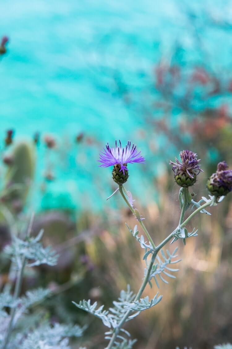Amalfi Coast Italy | Thistle and Mediterranean