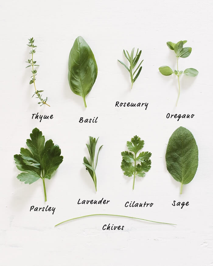 How to Grow Herbs | A Couple Cooks