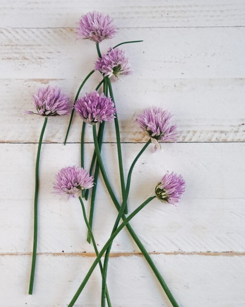 Chive flowers | Are chive flowers edible