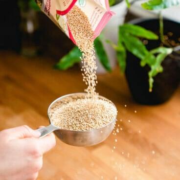 Quinoa to water ratio